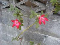 090912flower.jpg